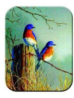 Tuftop Tempered Glass Kitchen Board, Wildlife Collection - Bluebirds Medium Manufactured to the Highest Quality Available.. Design is stylish and innovative. Satisfaction Ensured.. Great Gift Idea..  #Tuftop #Kitchen