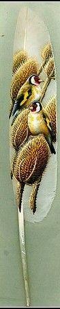 The finches are so pretty.