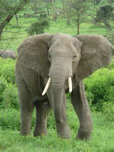 Elephants..... I love them!