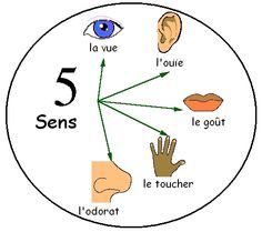 Les cinq sens (the 5 senses) - Le jardin d'Alysse French Language Lessons, French Lessons, French Teaching Resources, Teaching French, La Promenade De Flaubert, French Body Parts, French Proverbs, French Practice, French For Beginners