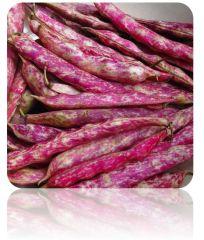 Cranberry Bush Bean (Borlotti) Seeds at $.99/pack | Grow Organic Beans