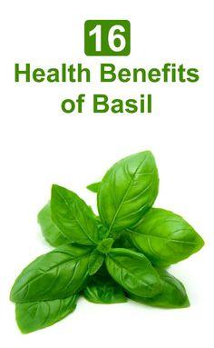 Basil has many health benefits, including; cardiovascular, anti-inlammatory, wight loss and anti-aging benefits. Here are 16 Health Benefits of #Basil - Selfcarers