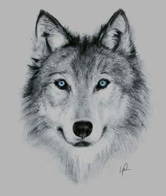 ! Wolf Tattoos, Celtic Tattoos, Animal Tattoos, Tatoos, Wolf Tattoo Sleeve, Tribal Sleeve Tattoos, Wolf Tattoo Design, Tattoo Designs, Animal Sketches