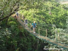Princeville Ranch Adventures - Kauai Hawaii.  Zip Line adventure.  Been there, done that.