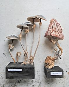 This collection of Fungus will go on sale on Friday 11th Oct 2013....in my Etsy shop at 7.30pm UK Time.....They are sold separately and...