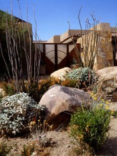 Desert landscape designs are typically implemented in extremely arid climates wi Plant Design, Garden Design, Boulder Garden, Desert Design, Outdoor Buildings, Organic Gardening Tips, Organic Plants, Free Plants, Desert Plants