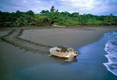 Parque Nacional Tortuguero, Limon, Costa Rica