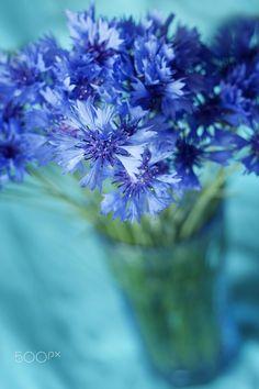 Cornflower bouquet - null