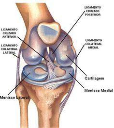 Interface: FISIOTERAPIA: Lesão de ligamento cruzado posterior...