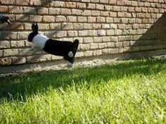 binky bunny - Google Search