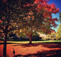 Fall in Ridgefield Ct