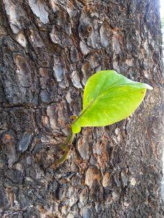 Num tronco ressecado Deus faz nascer uma vida!