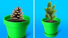Timestamps How to growth aloe vera Repair broken cactus Garden hacks ---------------------------------------------------------------------------------------- Crafts: . Indoor Gardening Supplies, Container Gardening, Gardening Tips, Aloe Vera Plant Indoor, Indoor Plants, Growing Vegetables, Growing Plants, Plantar Aloe Vera, Cactus House Plants