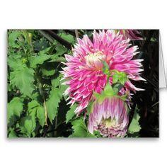 Pink #Chrysanthemum Card http://zazzle.com/rinchen365flower*  #birthday    #anniversary  #Mother's Day