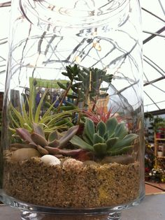 Succulents & airplants in glass terrarium. Designed by Cornell Farms, Portland, OR