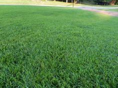 Best Alabama Gr Hybrid Zoysia Mike S Uncle Uses At The Lake