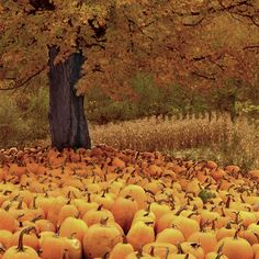 Pumpkins, Vermont, USA by Charlie Waite