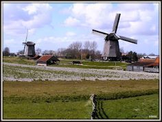 Windmills in North Holland - yes, typically Dutch!
