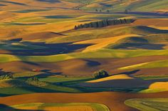 The Pea and Lentil Capital of the World... The Palouse!