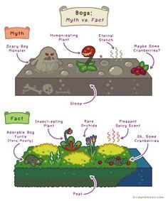 birdandmoon:  Bogs are beautiful. Original on my site | Patreon