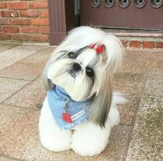 Baby Animals Super Cute, Cute Baby Dogs, Cute Funny Animals, Cutest Small Dog Breeds, Cute Small Dogs, Cutest Dogs, Really Cute Puppies, Cute Dogs And Puppies, Big Dogs