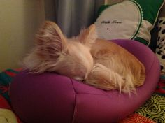 Sweet dreams! I am hiding in the bolster for the night!