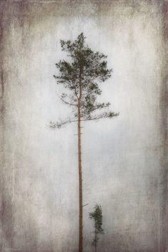 brausenpaul, »Baumwipfel«, Lobende Erwähnung, 1 Punkt, Thema: Pflanzen und Pilze – Kategorie: In freier Natur