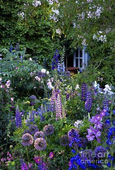 Mini Garden Cottage Garden Photograph by Liz Eddison.Mini Garden Cottage Garden Photograph by Liz Eddison Unique Garden, Diy Garden, Dream Garden, Garden Beds, Garden Oasis, Natural Garden, Garden Path, Garden Projects, Patio Gardens