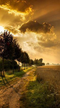 Autumn-Landscape-Dirt-Road-Trees-iPhone-6-Wallpaper.
