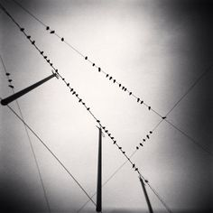 Michael Kenna - Photography - Fifty Two Birds, Zurich - Switzerland 2008 Minimal Photography, Abstract Photography, Black And White Photography, Fine Art Photography, Amazing Photography, Landscape Photography, Photography Lessons, Contemporary Photographers, Famous Photographers