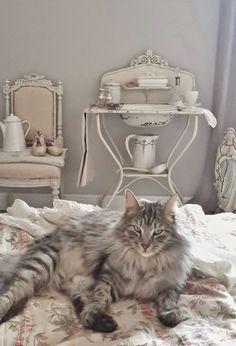 shabby cat - brocante-charmante