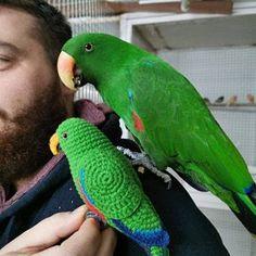Crochet Parrot, Crochet Birds, Homemade Stuffed Animals, Animal Fibres, Easter Toys, Parrot Toys, Bird Ornaments, Budgies