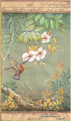 Ruby Topaz Hummingbird. Indian Miniature South American Ornithology Art.