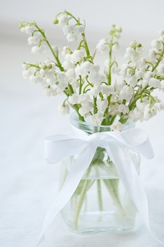 """""""May first is a National Holiday in France, officially known as La Fête du Travail (National Labour Day) and La Fête du Muguet (Lily of the Valley Day). It is a tradition on this day to offer a sprig Muguet (Lily of the Valley) to loved ones. My Flower, White Flowers, Beautiful Flowers, Birth Flower, Colorful Roses, Simply Beautiful, Spring Flowers, Deco Floral, Shades Of White"""
