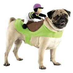 Boots and Barkley Jockey Rider Pet Costume  sc 1 st  Pinterest & If we were dressing up Molly this would be so cute!! Boots and ...