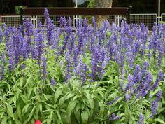10+++1+növény,+ami+hozzájárul+a+tüdő+egészségéhez,+megakadályozza+a+fertőzéseket,+és+visszafordítja+a+károsodásokat
