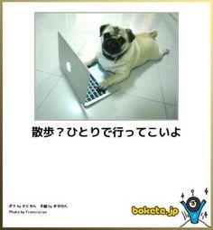 犬 ボケて まとめ Cute Dog Photos, Funny Pictures, Funny Dogs, Cute Dogs, Animals And Pets, Funny Animals, Japanese Funny, Can't Stop Laughing, Illustrations And Posters