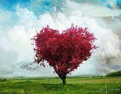 Prachtige hartvormige boom.
