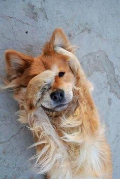 Aww Shucks - Cutest Paw - An Introspective World
