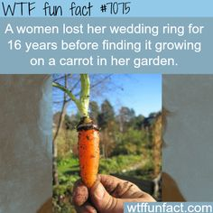 Woman finds her wedding ring growing on a carrot after she lost it - WTF fun facts