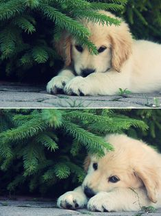 Adorable puppy under the tree.