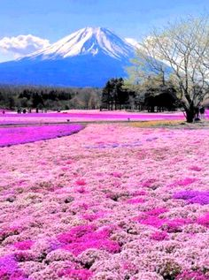 Below Mt Fuji, Honshu Island, Japan.