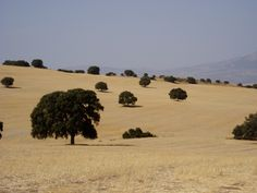andalucia fields Cadiz, Fields, Landscapes, Spain, Country Roads, Places, Travel, Courtyards, Andalusia