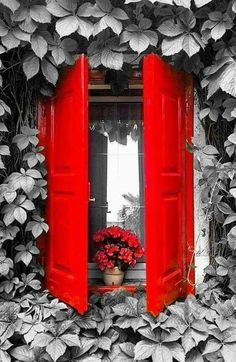 Cute red shutters on the windows! The Doors, Windows And Doors, Red Shutters, Window Shutters, Red Cottage, Cozy Cottage, Old Windows, Green Windows, Window View