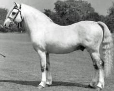 Coed Coch Madog foaled 1947 This was the pony that inspired the Beswick Pony.