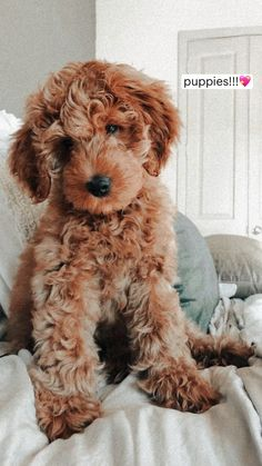 Super Cute Puppies, Cute Baby Dogs, Cute Little Puppies, Cute Funny Dogs, Cute Dogs And Puppies, Cute Funny Animals, Cute Pups, Cute Small Dogs, Adorable Puppies