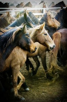 gathering mares 307 by Ree Drummond / The Pioneer Woman, via Flickr