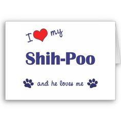 I ♥ my Shih-Poo