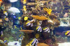 Peces tropicales en el área de arrecifes...   Free Photo #Freepik #freephoto #viajes Free Photos, Free Stock Photos, Mundo Marketing, Vector Photo, Tropical Fish, Painting, Pictures Of Fish, Marine Aquarium, Beautiful Fish