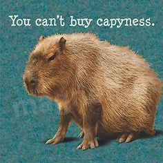 Magnet Picture Capybara Giant Rodent You Can't Buy Capiness